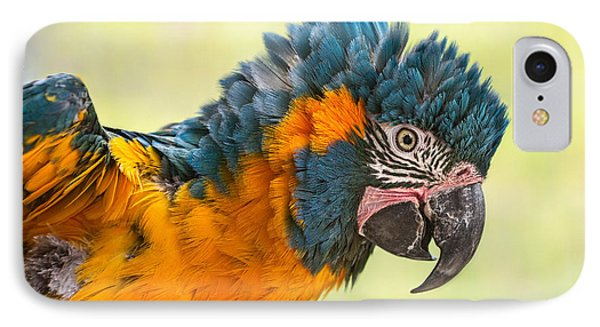 Blue Throated Macaw IPhone Case