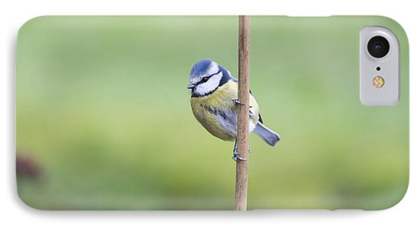 Titmouse iPhone 7 Case - Blue Tit On A Garden Cane by Tim Gainey