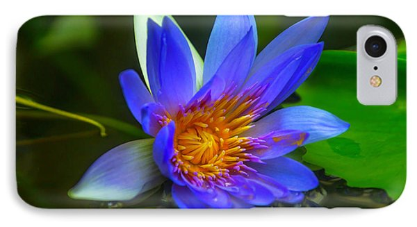 Blue Waterlily In Pond IPhone Case