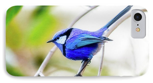 Blue Wren, Margaret River IPhone Case by Dave Catley