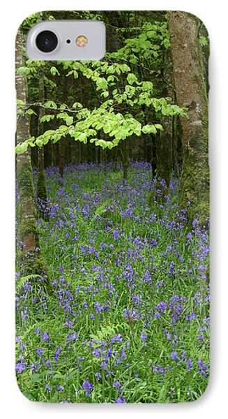 Bluebell Woods IPhone Case by Martina Fagan