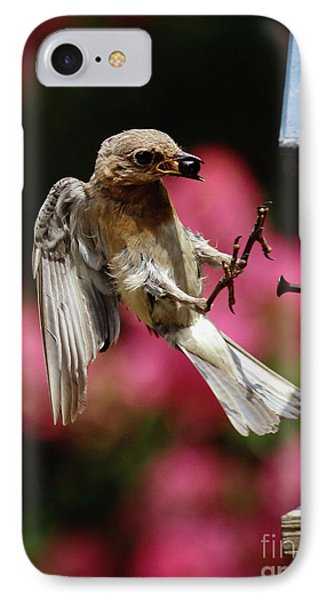 IPhone Case featuring the photograph Bluebird 0726162 by Douglas Stucky