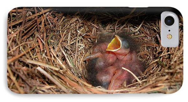 IPhone Case featuring the photograph Bluebird Babies by Marie Hicks