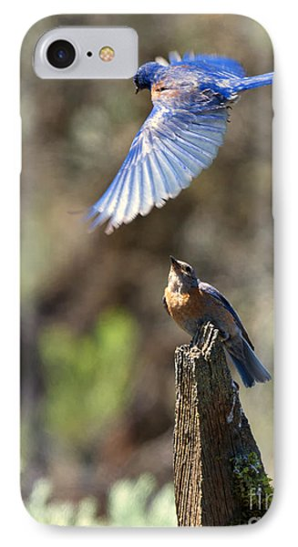 Bluebird Buzz IPhone Case by Mike Dawson
