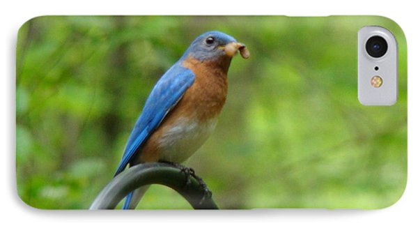 Bluebird Catches Worm IPhone Case
