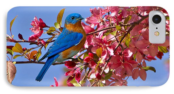 Bluebird In Apple Blossoms IPhone Case by Marie Hicks