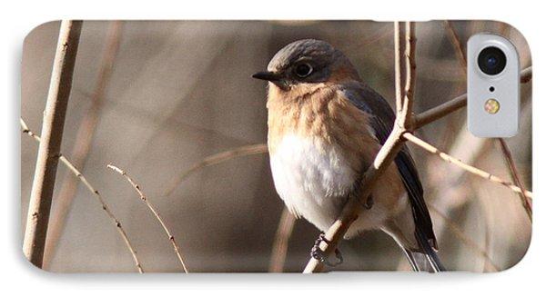 Bluebird In Beige IPhone Case