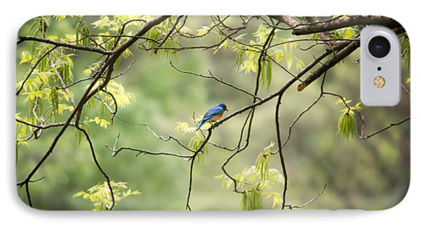 Bluebird In The Spring IPhone Case by Shelby  Young