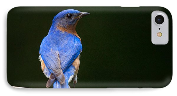 Bluebird Male Phone Case by Angel Cher