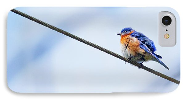IPhone Case featuring the photograph Bluebird Of Happiness by Linda Unger