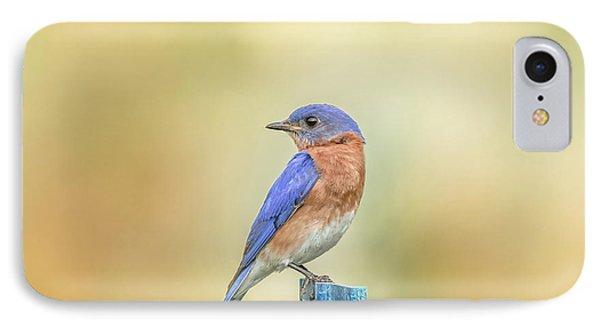 Bluebird On Blue Stick IPhone Case by Robert Frederick