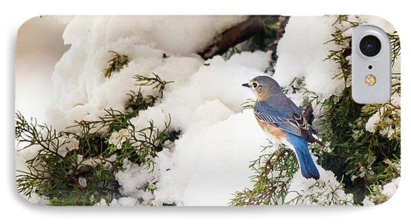 Bluebird On Snow-laden Cedar IPhone Case by Robert Frederick