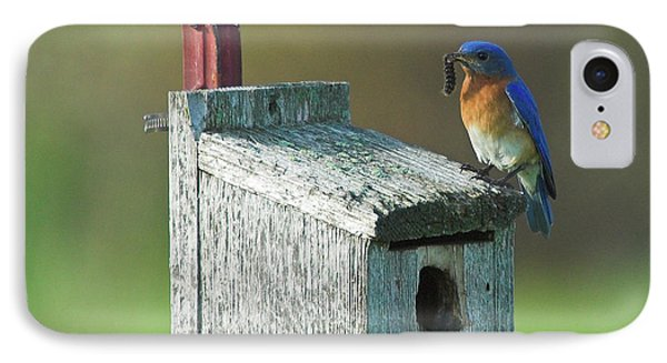 IPhone Case featuring the photograph Bluebird by Steve Stuller
