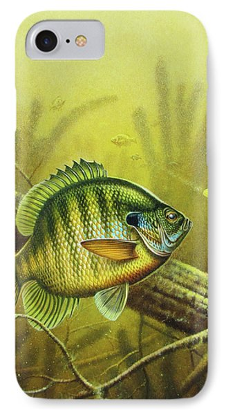 Bluegill And Jig IPhone Case by JQ Licensing