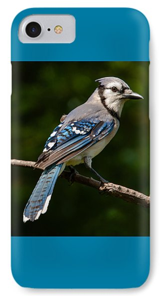 Bluejay's Way IPhone Case by Jim Moore