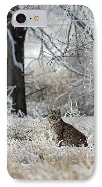 Bobcat And Heavy Frost Phone Case by Gary Langley