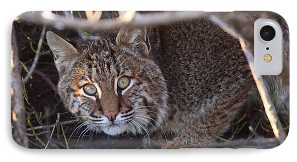 Bobcat IPhone Case by Bruce J Robinson