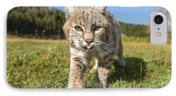 Bobcat Close Up IPhone Case by Jerry Fornarotto