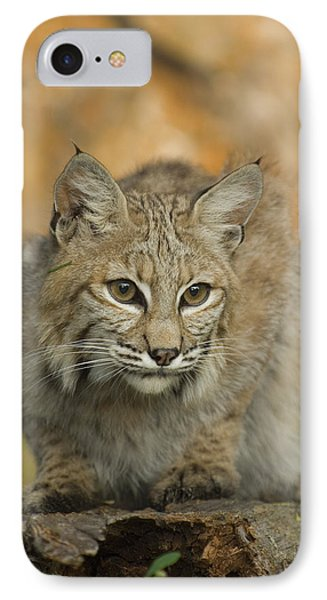 Bobcat Felis Rufus Phone Case by Grambo Photography and Design Inc.