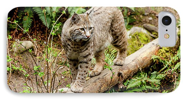 Bobcat In Forest IPhone Case by Teri Virbickis