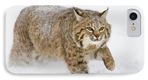 Bobcat In Snow IPhone Case by Jerry Fornarotto
