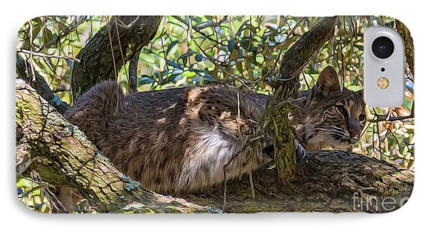 Bobcat Living High IPhone Case by Bill And Deb Hayes