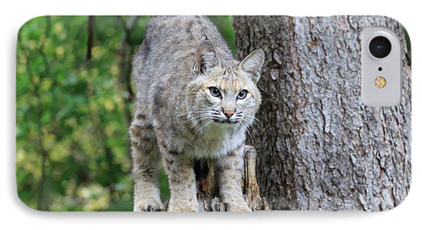 Bobcat IPhone Case by Louise Heusinkveld