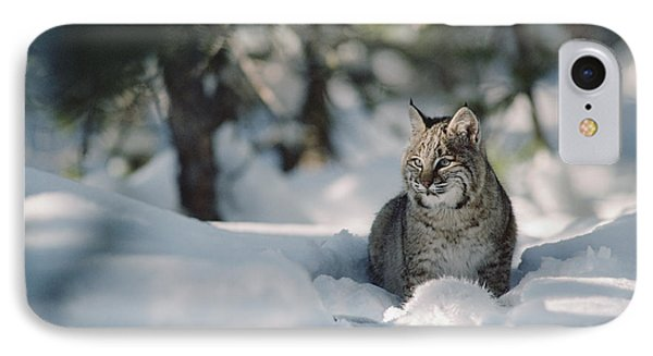 Bobcat Lynx Rufus Adult Resting In Snow IPhone Case by Michael Quinton