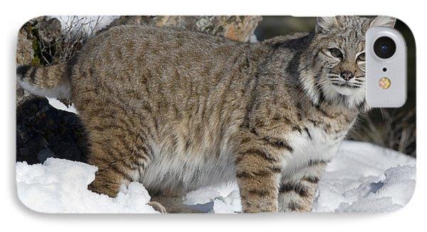 Bobcat Lynx Rufus In The Snow Phone Case by Matthias Breiter