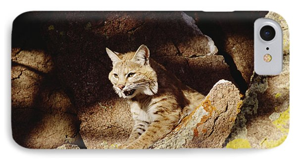 Bobcat Lynx Rufus Portrait On Rock Phone Case by Gerry Ellis