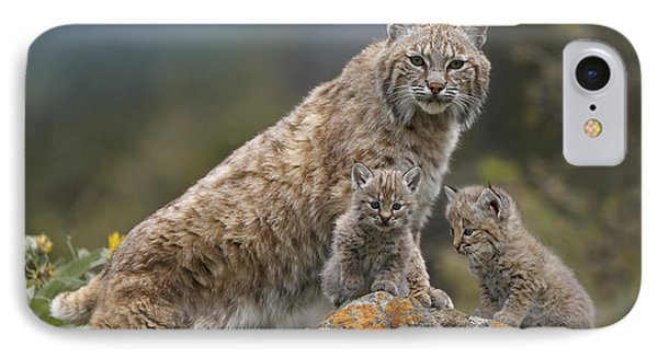 Bobcat Mother And Kittens North America Phone Case by Tim Fitzharris