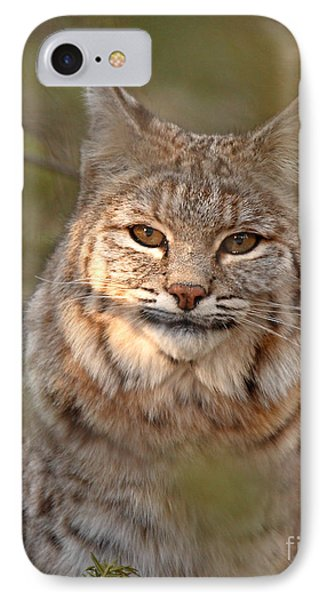 Bobcat Portrait Surrounded By Pine Phone Case by Max Allen