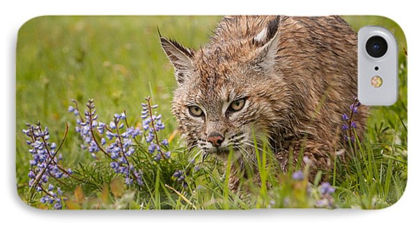Bobcat Stalking IPhone Case by Jerry Fornarotto