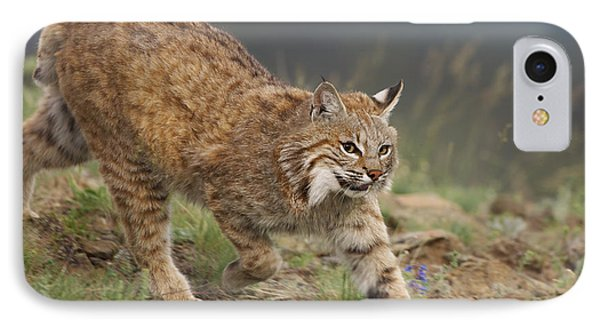 Bobcat Stalking North America IPhone Case by Tim Fitzharris
