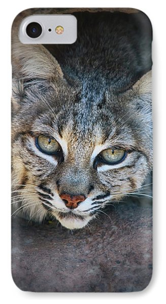 Bobcat Stare IPhone Case by Elaine Malott