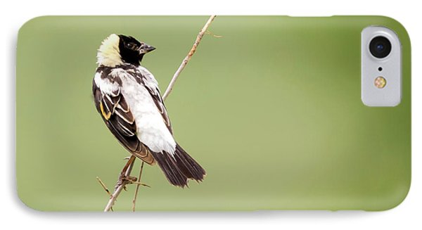 IPhone Case featuring the photograph Bobolink Looking At You by Ricky L Jones