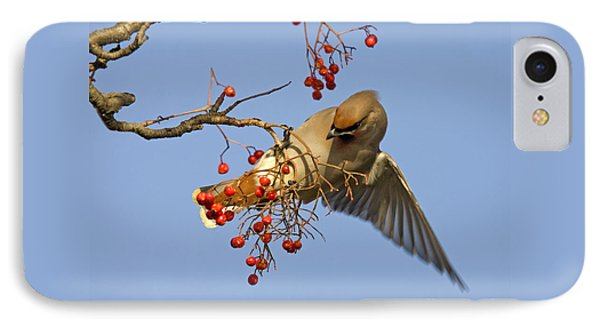 Bohemian Waxwing IPhone Case by Liz Leyden
