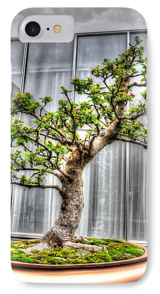 Bonsai Tree II IPhone Case by Wade Brooks
