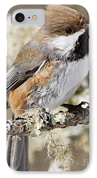 Boreal Chickadee Phone Case by Larry Ricker
