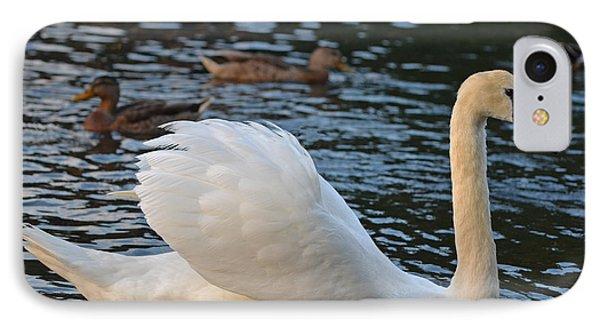 Boston Public Garden Swan Amongst The Ducks Ruffled Feathers IPhone Case