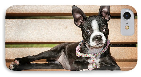 Boston Terrier Puppy Relaxing IPhone Case by Stephanie Hayes