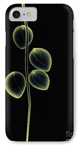 Botanical Study 2 Phone Case by Brian Drake - Printscapes