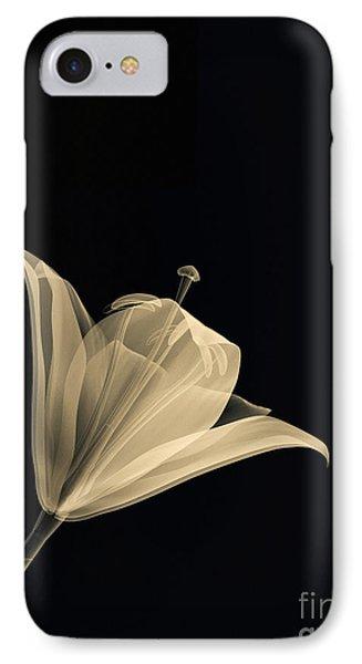 Botanical Study 3 Phone Case by Brian Drake - Printscapes