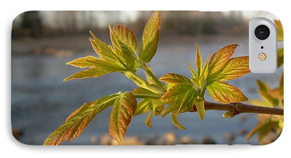 IPhone Case featuring the photograph Box Elder Leaves In Dawn Light by Kent Lorentzen