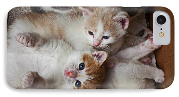 Box Full Of Kittens IPhone Case by Garry Gay