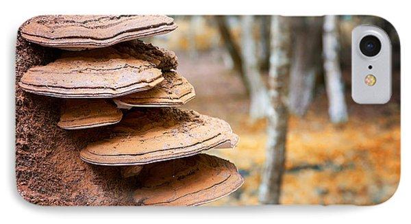 Bracket Fungus On Beech Tree IPhone Case
