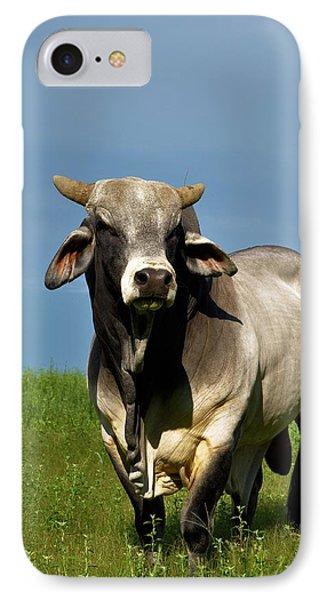 IPhone Case featuring the photograph Brahman Boss by Jan Amiss Photography