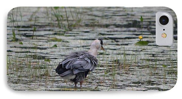 Breezy Blue- Great Blue Heron IPhone Case by David Porteus