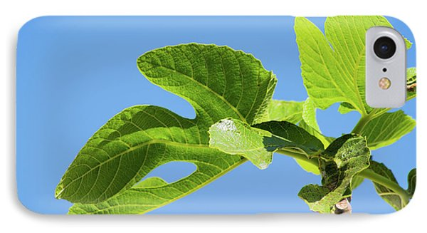 Bright Green Fig Leaf Against The Sky Phone Case by Cesar Padilla