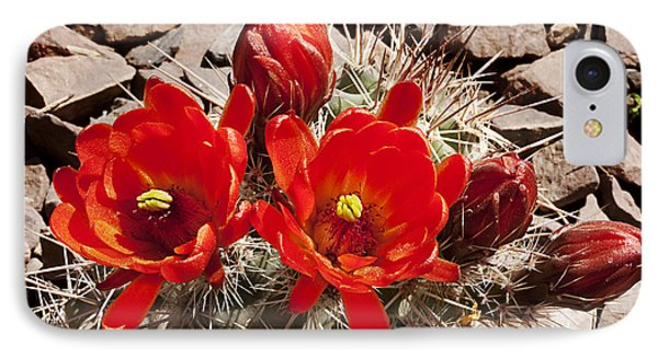 IPhone Case featuring the photograph Bright Orange Cactus Blossoms by Phyllis Denton